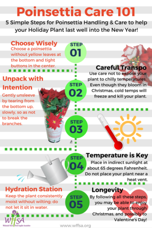 Poinsettia Care 101